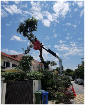 Importance of Tree Cutting