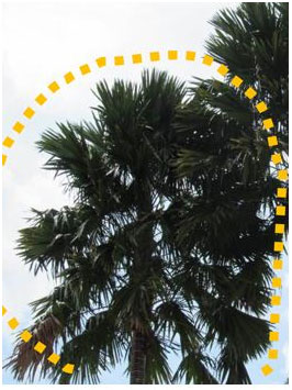 tree pruning services in Singapore