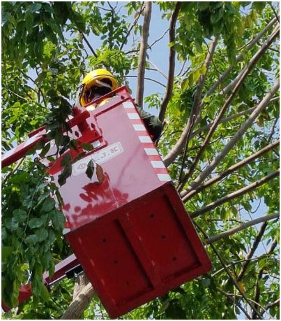 tree cutting services in Singapore