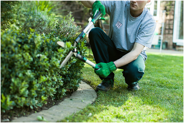 Hedges and bushes must be trimmed at least twice a year