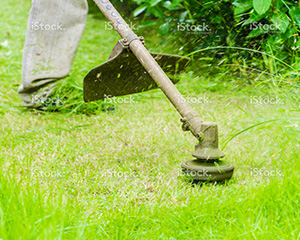 Grass Cutting Gardening Services 4