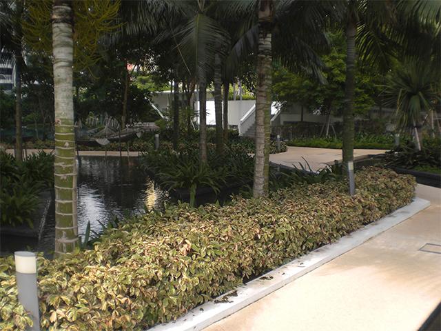 landscaping condo portfolio 4