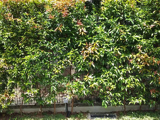 landed landscaping portfolio 5