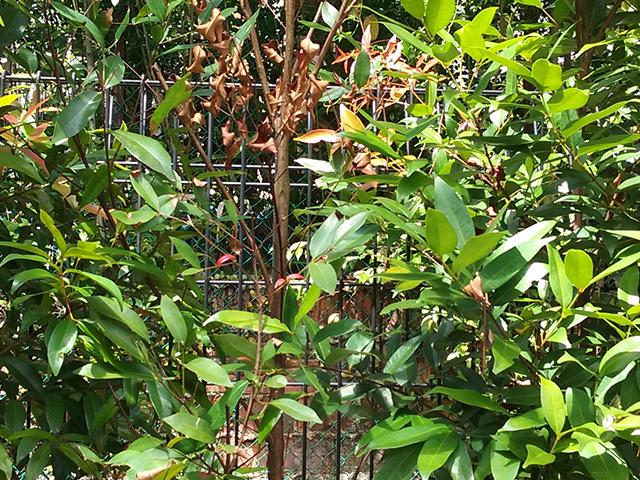 landed landscaping portfolio 7