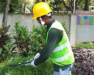Plant Pruning Gardening Services 1