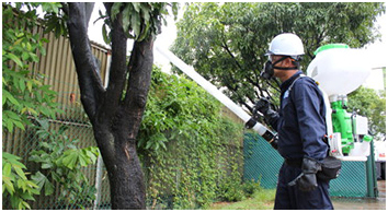 Trimming trees during a routine maintenance service
