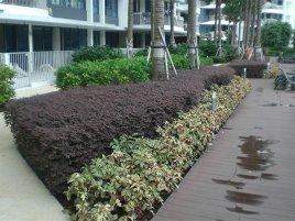 landscaping condo portfolio 2