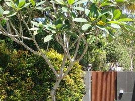 landed landscaping portfolio 6