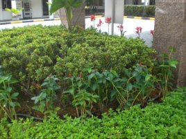singapore landscaping commercial 3