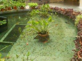 singapore landscaping services paya lebar school 1
